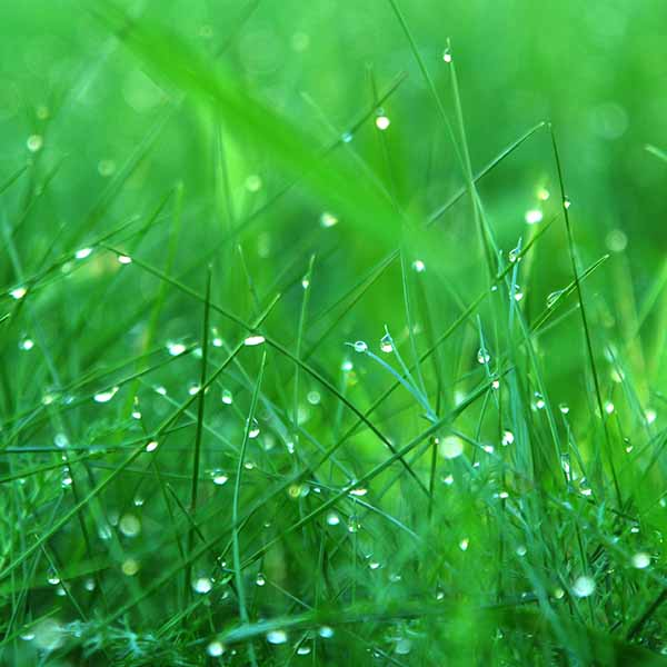 Square_0002_GreenGrass