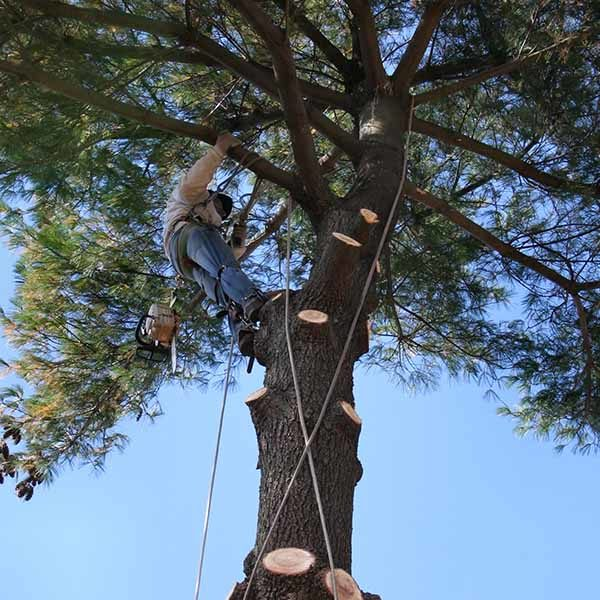 Square_0004_Trees